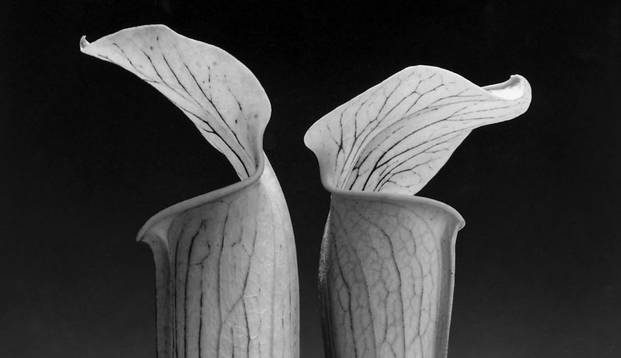 Articles - You Should Go See The Mapplethorpe Exhibition